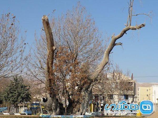 ورود 30 اثر استان سمنان به فهرست آثار ملی در سال گذشته
