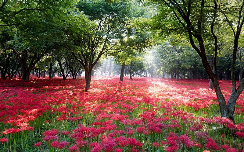 تصاویر فصل بهار در کره جنوبی، طبیعت شگفت انگیز شرق آسیا
