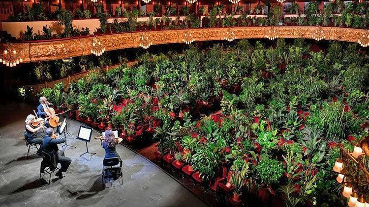 متفاوت ترین تماشاگران یک برنامه موسیقی ، اپرا برای گل و گیاه در زمانه کرونا